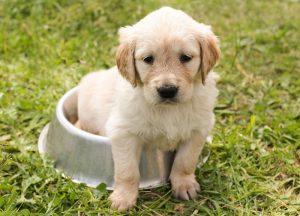Misky pre psov, ktoré sa im budu páčiť