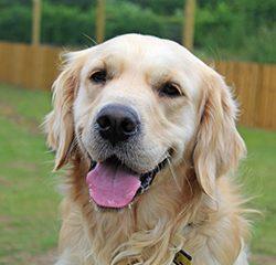 Toaleta pre psov zabezpečí hygienické prostredie