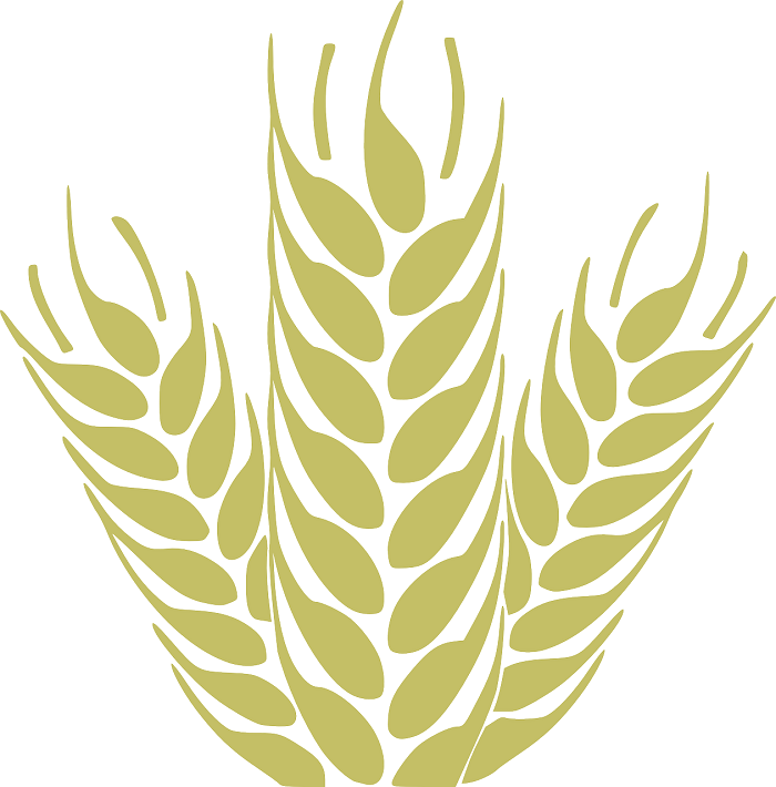 Pšenica na poliach