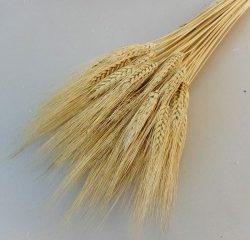 Pšenica a jej využitie v kuchyni